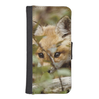 Canada, Point Pelee National Park. Young red fox Phone Wallets