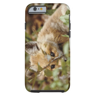 Canada, Point Pelee National Park. Young red fox Tough iPhone 6 Case