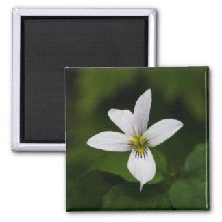 Canada Violet White Wildflower Square Magnet