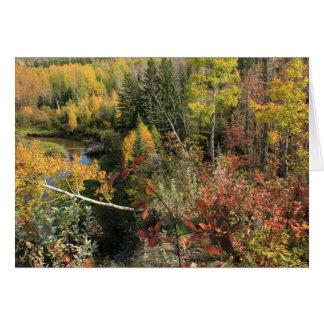 Canadian Autumn Card