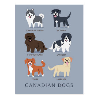 Canadian Dogs Postcard