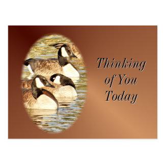 Canadian Geese blank Postcard- customize Postcard