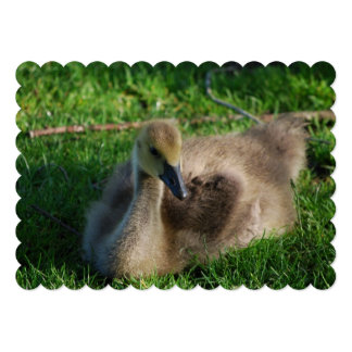 Canadian Geese Gosling 13 Cm X 18 Cm Invitation Card