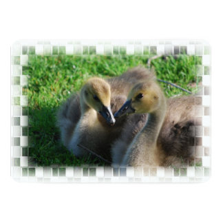 Canadian Geese Goslings 13 Cm X 18 Cm Invitation Card