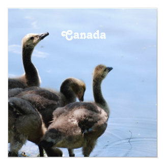 Canadian Geese Invitations
