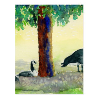 Canadian Geese Postcard
