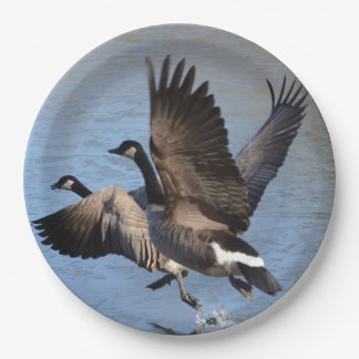 Canadian Geese Taking Flight 9 Inch Paper Plate