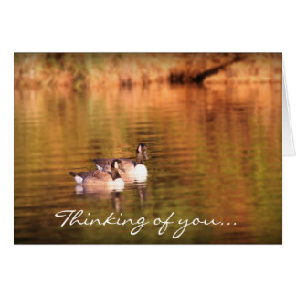 Canadian geese - thinking of you card