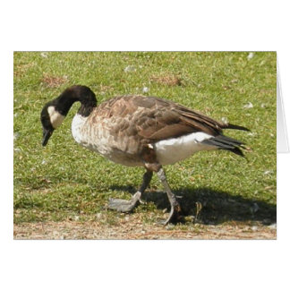 Canadian Goose Card