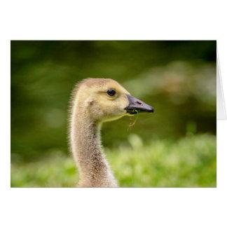 Canadian Goose (Gosling) Card