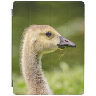 Canadian Goose (Gosling) iPad Cover