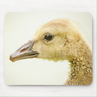 Canadian Goose (Gosling) Mouse Pad