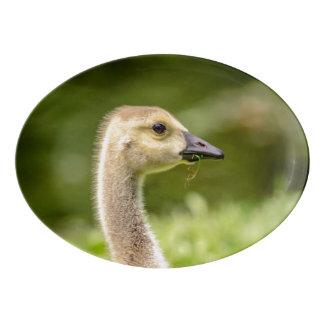 Canadian Goose (Gosling) Porcelain Serving Platter
