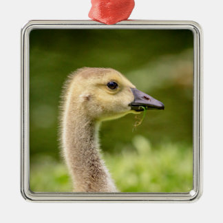 Canadian Goose (Gosling) Silver-Colored Square Decoration