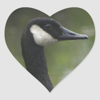 Canadian Goose Heart Sticker