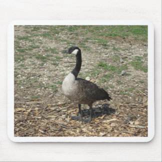 Canadian Goose Mouse Pads