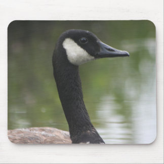 Canadian Goose up close Mouse Pad