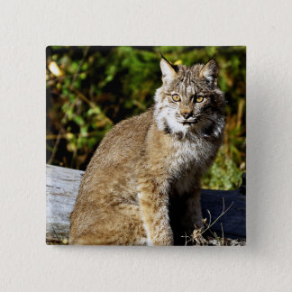 Canadian Lynx 15 Cm Square Badge