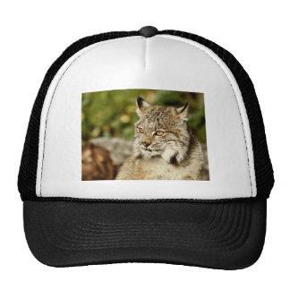 Canadian Lynx Cap