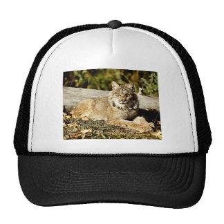 Canadian Lynx Hat