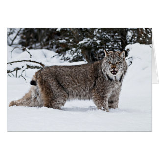 Canadian Lynx in the Snow Card