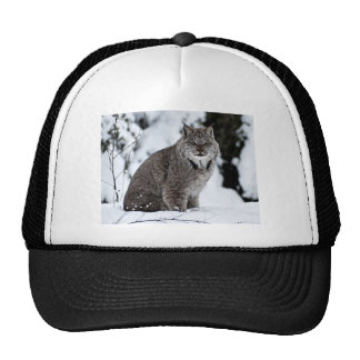 Canadian Lynx in the Snow Hats