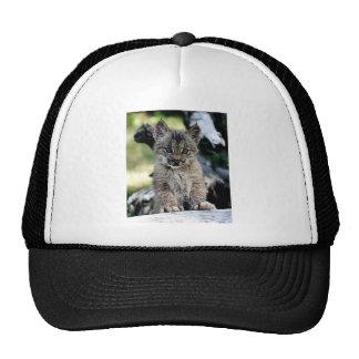 Canadian Lynx Kitten Cap