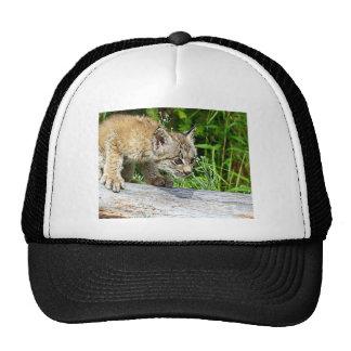 Canadian Lynx Kitten on the Hunt Mesh Hats