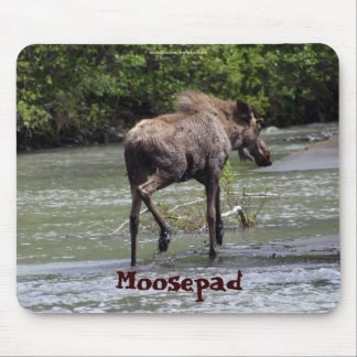 Canadian Moose  Funny Wildlife Mousepad