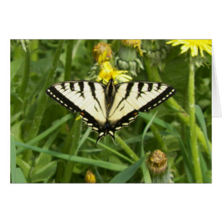 Canadian Tiger Swallowtail Butterfly Notecard