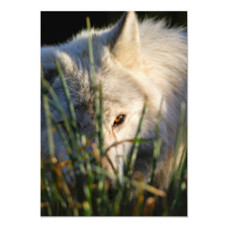 Canadian Timber Wolf Invitation Custom Invitations