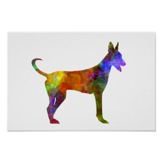 Canarian Warren Hound in watercolor Poster