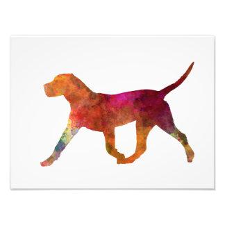 Canary bulldog in watercolor photo print
