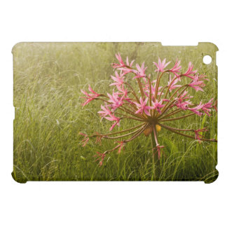 Candelabra Flower (Brunsvigia Radulosa) iPad Mini Covers