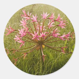 Candelabra Flower (Brunsvigia Radulosa) Round Sticker