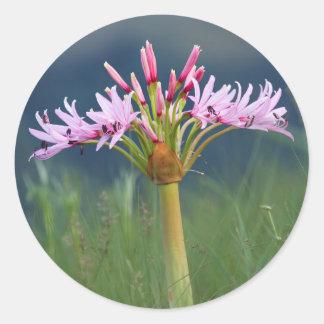 Candelabra Flower (Brunsvigia Radulosa), Umgeni Round Sticker