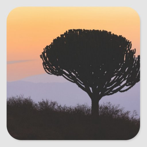 Candelabra Tree silhouetted at sunrise, Stickers