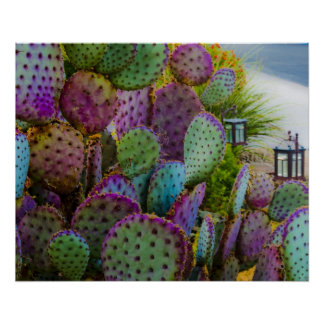Candy Cactus Poster
