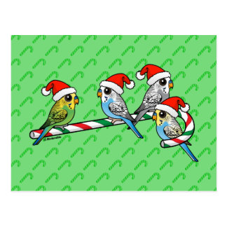 Candy Cane Santa Budgies Postcard