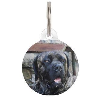 cane corso grey brindle pet tag