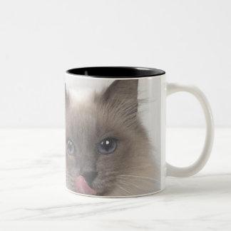 caneca gato cinza Two-Tone coffee mug
