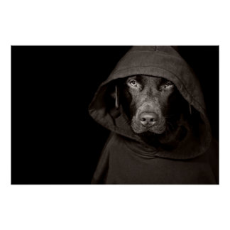 Canine Hoody Poster