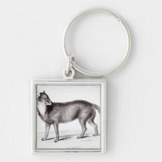 Canis Antarcticus Key Ring