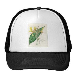 Canna glauca - Botanical Art Trucker Hat