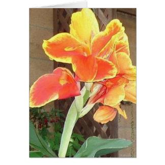 Canna Lily notecard