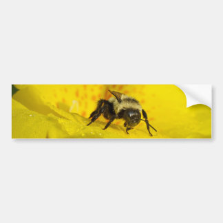 Canna Lily with Bumble Bee Bumper Sticker