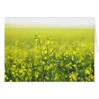Canola Flowering in Field. Card