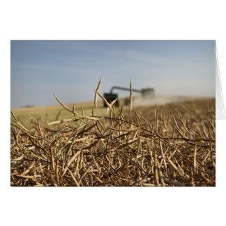 Canola Harvest, Combine, Grain Cart, Blank Card