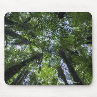 Canopies of ponga trees in lush native bush mouse pad