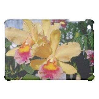 Cantalope Setting Sun (Brassocleya) flowers iPad Mini Covers